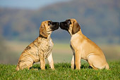 PUP 16 KH0005 01