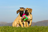 PUP 16 KH0006 01