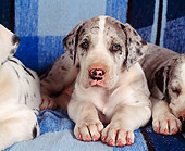 PUP 16 RK0008 01
