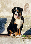 PUP 17 CB0001 01