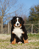 PUP 17 CB0006 01