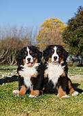 PUP 17 CB0007 01