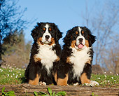 PUP 17 CB0008 01