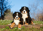 PUP 17 CB0009 01
