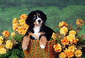 PUP 17 FA0002 01