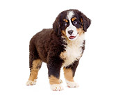 PUP 17 JE0004 01