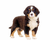 PUP 17 JE0005 01