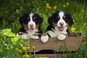 PUP 17 KH0003 01