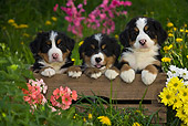 PUP 17 KH0004 01