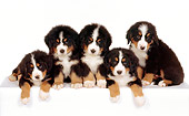 PUP 17 RK0012 02