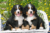 PUP 17 SJ0002 01
