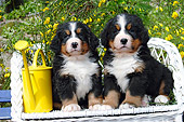 PUP 17 SJ0003 01
