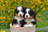 PUP 17 SJ0004 01