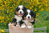 PUP 17 SJ0005 01