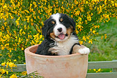 PUP 17 SJ0008 01