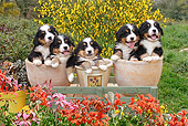 PUP 17 SJ0011 01