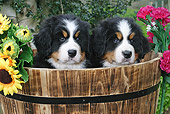 PUP 17 SJ0013 01