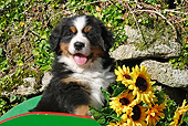 PUP 17 SJ0014 01