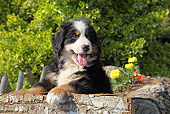 PUP 17 SJ0017 01