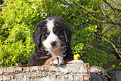 PUP 17 SJ0018 01