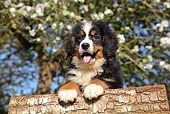 PUP 17 SJ0020 01