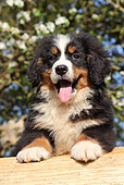 PUP 17 SJ0021 01