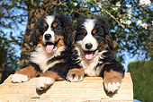 PUP 17 SJ0022 01