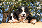PUP 17 SJ0023 01