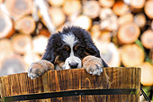 PUP 17 SJ0024 01
