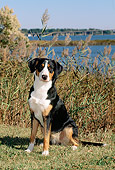 PUP 17 CE0001 01
