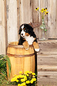 PUP 17 CE0005 01