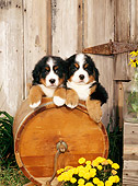 PUP 17 CE0006 01