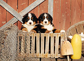 PUP 17 CE0007 01