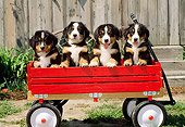 PUP 17 CE0009 01