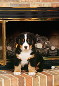 PUP 17 CE0010 01