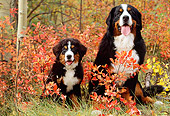 PUP 17 LS0001 01