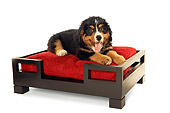 PUP 17 MQ0005 01