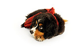 PUP 17 MQ0006 01