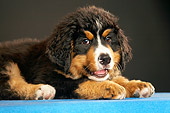 PUP 17 MQ0007 01