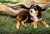 PUP 17 RC0001 01