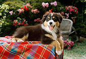 PUP 17 RC0003 01