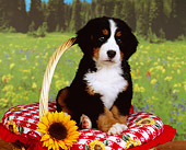 PUP 17 RK0010 03