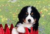 PUP 17 RK0015 07