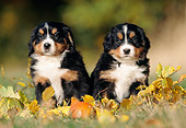 PUP 17 SS0001 01