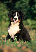 PUP 17 SS0002 01