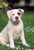 PUP 18 AB0001 01