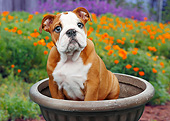 PUP 18 BK0003 01