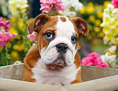 PUP 18 BK0004 01