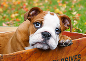 PUP 18 BK0010 01