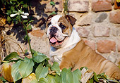 PUP 18 CB0001 01